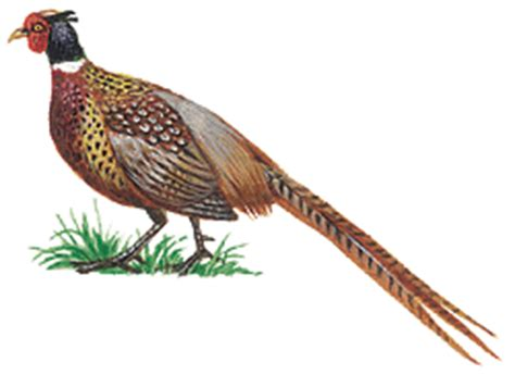state bird of south dakota introduction to geography of south dakota geography of south dakota howstuffworks