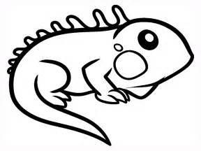 iguana coloring page iguana facts and