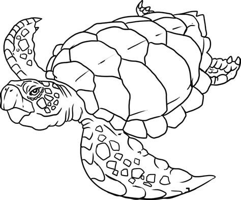 sea turtle coloring pages free az coloring pages