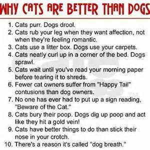are cats or dogs better why cats are better than dogs friends
