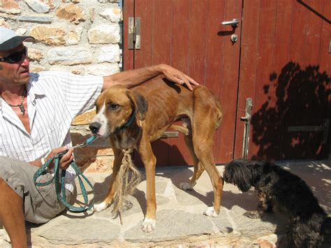 poor puppy paros animal welfare poor from naoussa