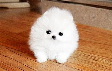 the cutest dogs in the world 10 cutest breeds of all time listamaze