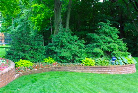 types  evergreens  landscaping trees  shrubs