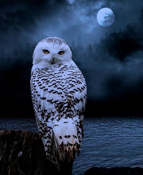Kb Eyeliner Owl Landbis Eyeliner Burung Hantu Eye Liner Lucu Murah snowy owl lovely styles time