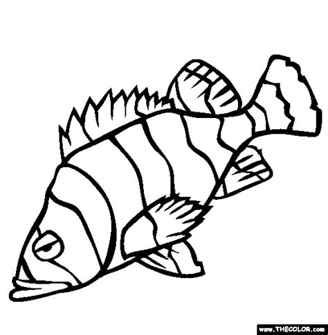 Coloring Pages Rockfish | sea life online coloring pages page 1