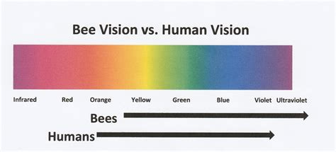 Compared To Yellow Light Orange Light Has by How Bees See And Why It Matters Bee Culture