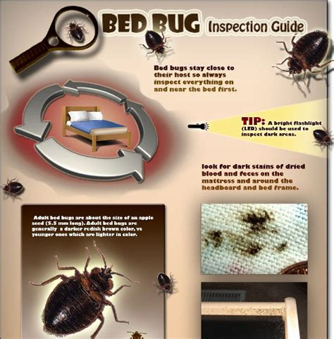bed bug inspection cost bed bug and pest control why should be snoozing on a