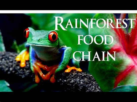 amazon cooking rairforest food chain rainforest ecosystem youtube
