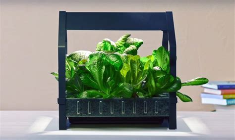 ikea indoor garden ikea launches indoor garden that can grow food all year