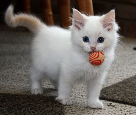 who plays cat beautiful cat with viralswarm