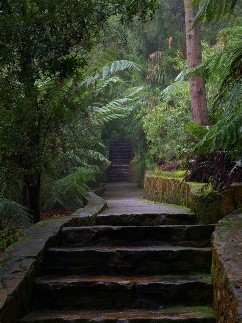 Panoramio Photo Of Rainforest Gully Path Australian National Botanical Gardens Canberra