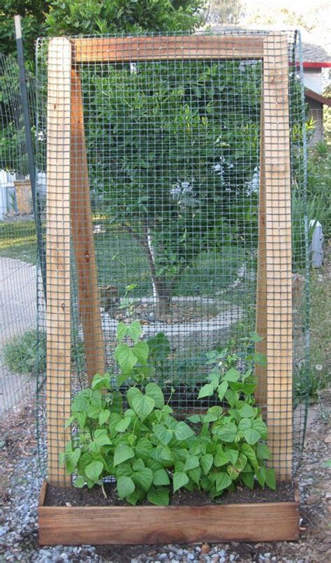 Trellis Materials build a trellis using sturdy materials like 2 x 4 s and hardware cloth you can fashion