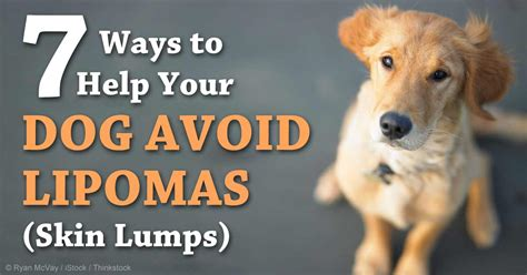 fatty tumors in dogs why removing most lipomas is not recommended