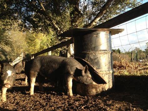 how to make homemade pig feeders homemade ftempo