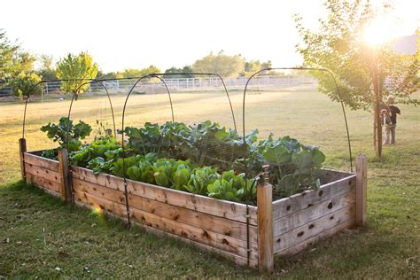 backyard bed finley and oliver our raised beds