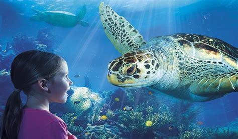 Win Een Van De 30 Duotickets Voor Sea Life Blankenberge