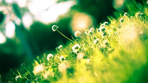 Nägel Schwarz Weiß 4245 by Die 61 Besten Schwarzwei 223 E Blumen Hintergrundbilder