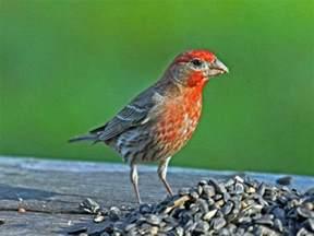 Bird Feeders Raleigh Back Yard Birds Of Western Carolina Owlcation