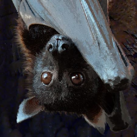 mammifero volante pipistrello myst cyclopedia
