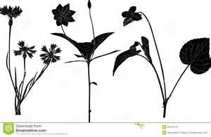 wild flowers sketches white royalty free stock photo image 33333115
