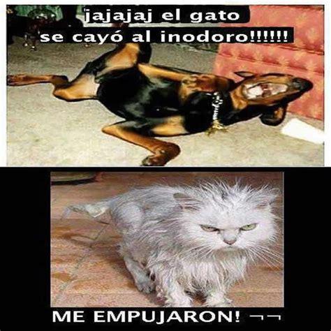 imagenes animales chistosos imagenes graciosas de animales en facebook mundo
