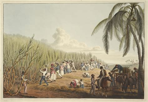 French Colonial by File Slaves Cutting The Sugar Cane Ten Views In The