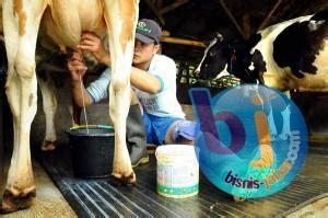 Bibit Sapi Perah Impor jabar siap impor sapi perah bandung