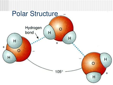 properties of water worksheet biology fresh biology i cp stock