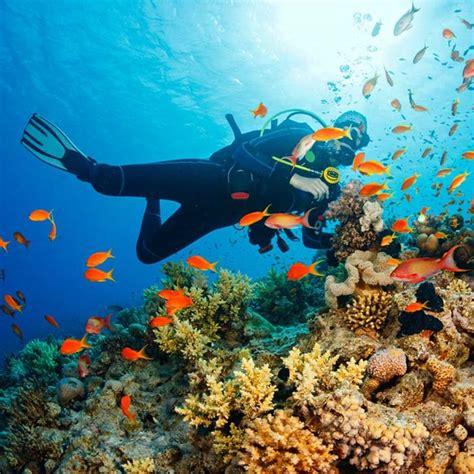 great barrier reef dive aussie travel oz experience