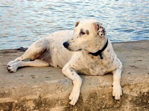abotonada por un perro videos de zoofilia mujeres abotonadas por perros zoofilia gratis mujeres