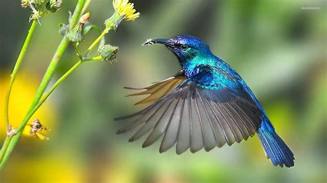 what is the only bird that can fly backwards hummingbirds are the only creatures that can fly backwards interesting hangout