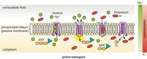 unique characteristics  prokaryotic cells biology