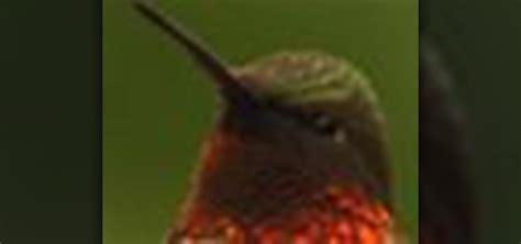 how to make hummingbird food 171 birds