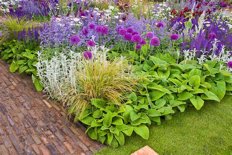 Garden Border Plants Flowers Allium Nepeat Ornamental Grasses Stachys In Gorgeous Flower Planting Combination