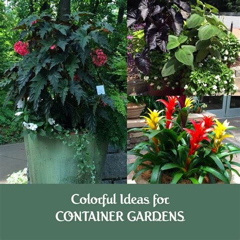 Ideas For Container Gardens Ideas For Container Gardens