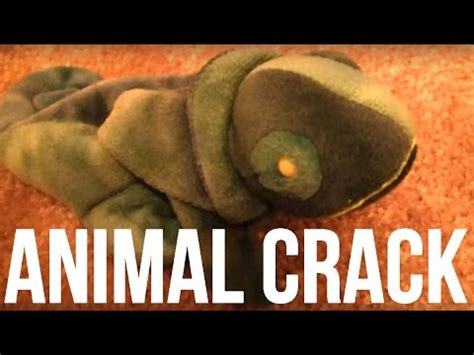 animal crack youtube