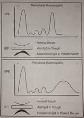 urinary patterns quizlet immunology serology 2 flashcards quizlet