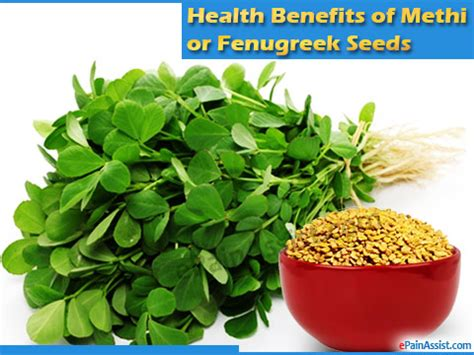 Its All Fenugreek To Me Theitlistscom by Health Benefits Of Methi Or Fenugreek Seeds Its Side Effects