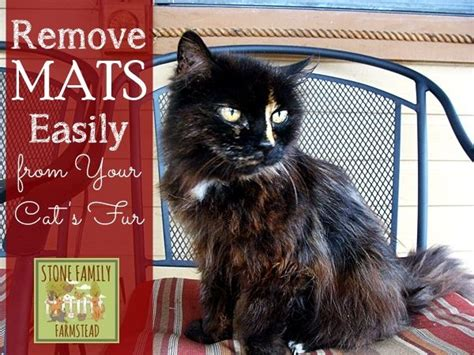 Cat Fur Mat Remover by How To Remove Mats Easily From Your Cat S Fur And The