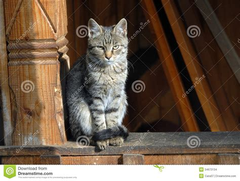 domestic cat stock images image 34673134