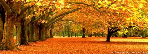 autumn trees facebook cover halloween pinterest trees autumn trees  colors