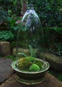 making moss terrariums or not moss and stone gardens