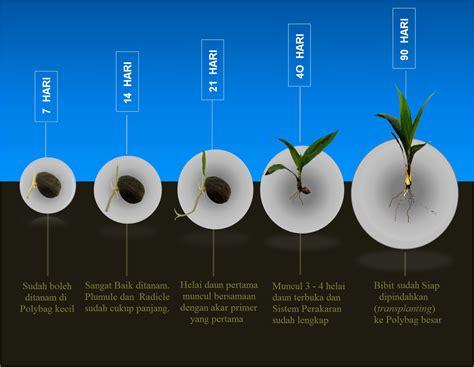 Bibit Terong Ungu Terbaik perkecambahan benih biji dunia tanaman