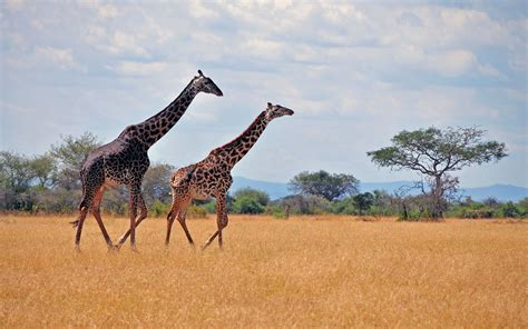 the promise of kilimanjaro books tanzania safaris and kilimanjaro treks book a tanzanian