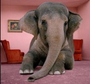the elephant in the living room the elephant in the living room tobacco harm reduction