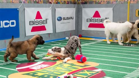 puppy bowl locker room puppy bowl ix a halftime show a locker room and other favorites