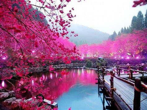 gambar wallpaper bunga  indah blog teraktual