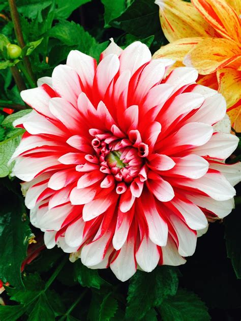photos of flowers garden therapy most amazing flower