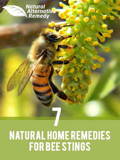 Bee Stinger Detox by 7 Healing Home Remedies For Bee Stings