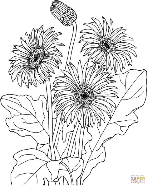 printable daisies flowers gerbera coloring page free printable coloring pages